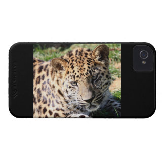 Leopard cub baby photo iphone 4 case mate barely