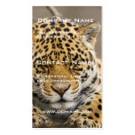 Leopard Cub Business Card