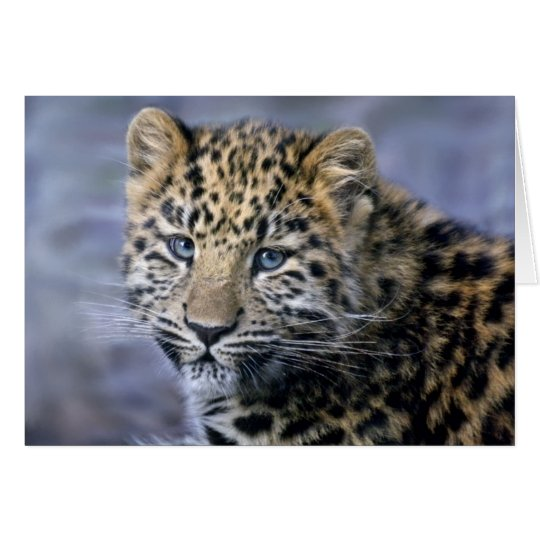 Leopard Cub Card