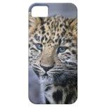 Leopard Cub iPhone 5 Case-Mate Case
