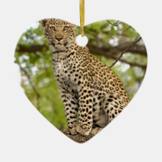 Leopard Cub on a Limb Ceramic Ornament