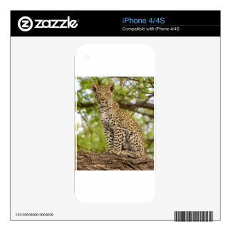 Leopard Cub on a Limb Decal For The iPhone 4S