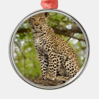 Leopard Cub on a Limb Metal Ornament