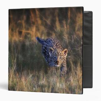 Leopard Cub Panthera Pardus) as seen in the Vinyl Binder