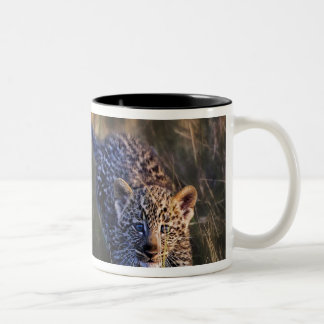 Leopard Cub Panthera Pardus) as seen in the Coffee Mugs