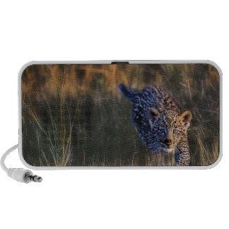 Leopard Cub Panthera Pardus) as seen in the iPod Speaker