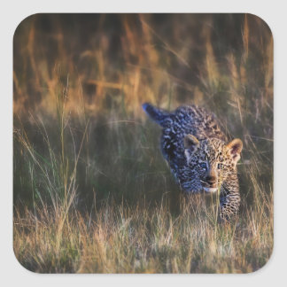 Leopard Cub Panthera Pardus) as seen in the Square Sticker