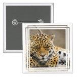 Leopard Cub Pin