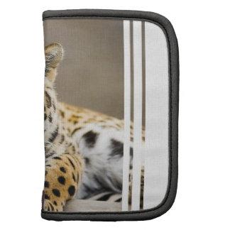 Leopard Cub Wallet Folio Folio Planner
