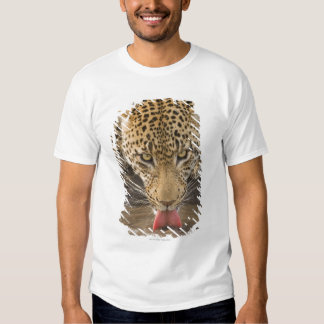 Leopard drinking, Greater Kruger National Park, T Shirt