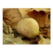 Leopard Earthball Fungus Postcard