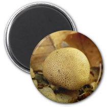 Leopard Earthball Mushroom Magnet