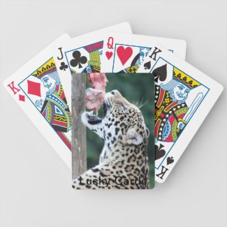 Leopard Eating  Playing Cards