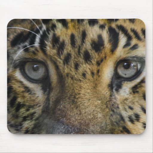 Leopard Face of Hunger Mouse Pad