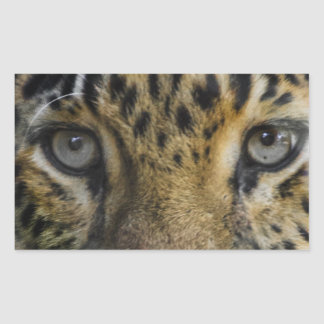 Leopard Face of Hunger Rectangular Stickers