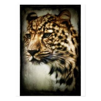 Leopard face postcard