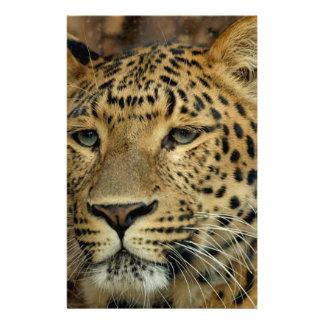 Leopard Flyers