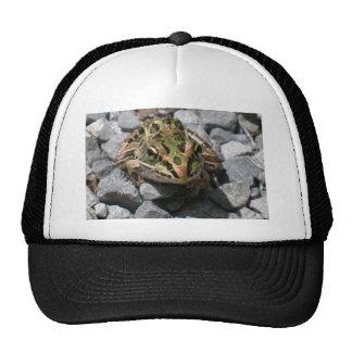 Leopard Frog Mesh Hat