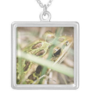 Leopard frog in grass silver plated necklace