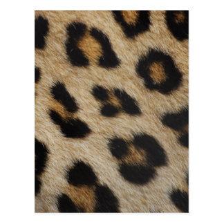 Leopard Fur Texture Pattern Postcard