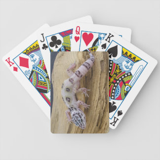 Leopard Gecko Bicycle Playing Cards