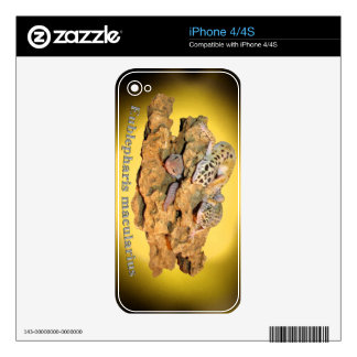 Leopard gecko design for all! decals for iPhone 4S