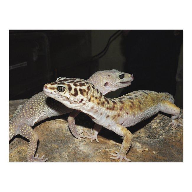 Leopard gecko design for all gecko lovers!