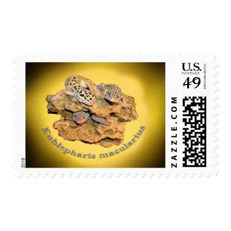 Leopard gecko design for all! postage stamp