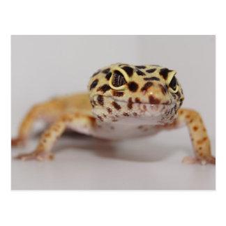 Leopard Gecko Postcard