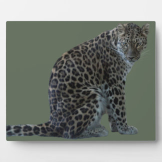 LEOPARD GLARE PLAQUE