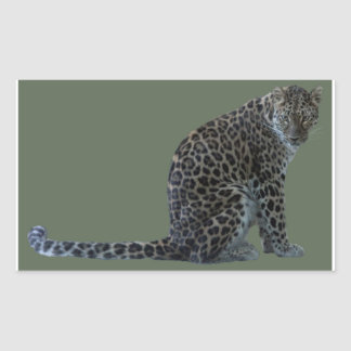 LEOPARD GLARE RECTANGULAR STICKER