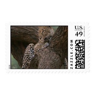 Leopard Habitat Postage Stamp
