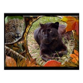 leopard-halloween-2010-0017-h postcard