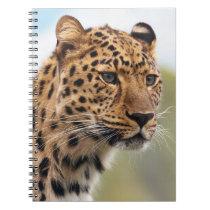 Leopard Head Shot Notebook