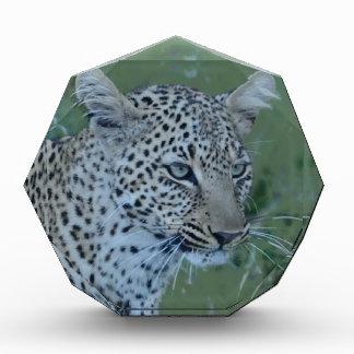 Leopard  Head Tee Award
