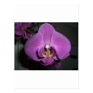 Leopard Head Yellow Purple Orchid Postcard