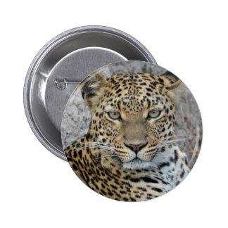 Leopard Headshot Tom Wurl.jpg Button