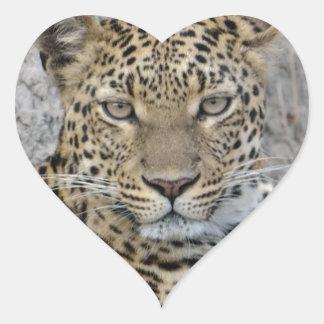 Leopard Headshot Tom Wurl.jpg Heart Sticker