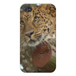 Leopard i iPhone 4 cases