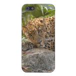 Leopard i iPhone 5 covers