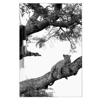Leopard in a tree dry erase board