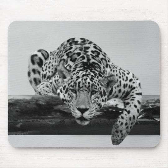Leopard in black and white mouse pad