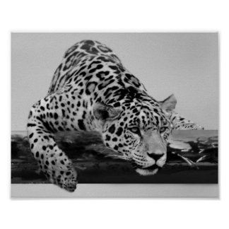 Leopard in black and white print