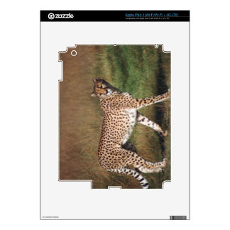 Leopard in plain iPad 3 decals