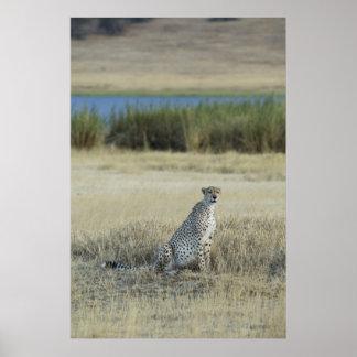 Leopard in Tanzania Poster