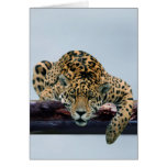 Leopard in the tree 1 card