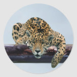 Leopard in the tree 1 stickers