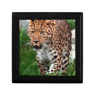Leopard in the wild gift box