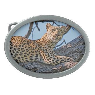 Leopard in tree oval belt buckle