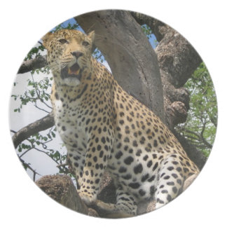 Leopard in Tree Plate